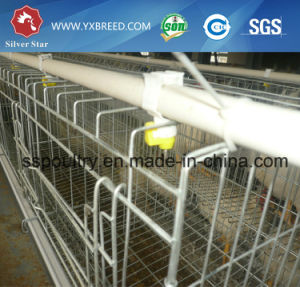 Cameroon Poultry Cage of Battery 3 or 4 Tiers (A-3L90) pictures & photos