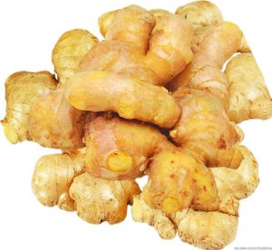 Fresh Fat Giant Big Natural Mature Ginger