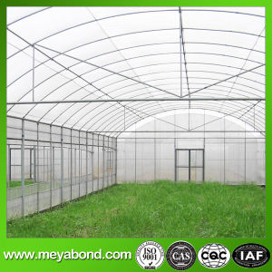 Agriculture Anti-Insect Net New 100% HDPE Material pictures & photos