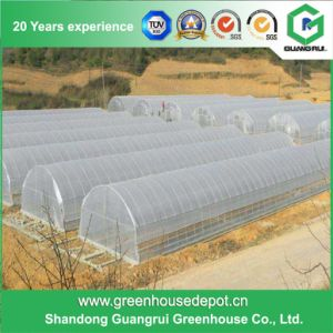 Low Price Agricultural Plastic Greenhouse for Vegetable and Fruit Growing pictures & photos