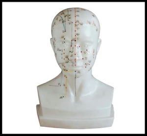 Life-Size Acupuncture Head Model (M-2-L) pictures & photos