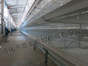 Galvanized H Stype of Automatic Broiler Cage pictures & photos