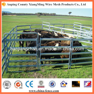 Economy Used 5/6 Rails Galvanized Cattle Panels (XMM-CP) pictures & photos