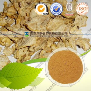 High Quality Natural Maca Extract Maca P. E. pictures & photos