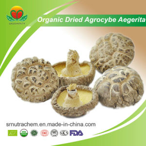 Manufacturer Supplier Organic Dried Agrocybe Aegerita pictures & photos