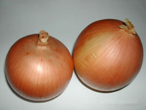 Fresh Yellow Onion with Middle Size for MID-East Market pictures & photos