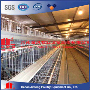 Chicken Cage with Manure Removal System pictures & photos