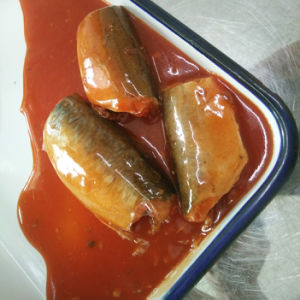 Canned Mackerel in Tomato Sauce pictures & photos