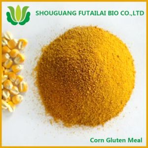 Corn Gluten Meal with High Quality and Low Price