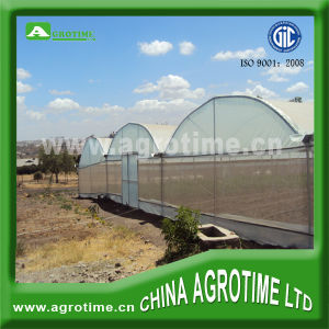 Economical Multi-Span Agriculture Greenhouse for Large Sclture Growth (CMY3830)