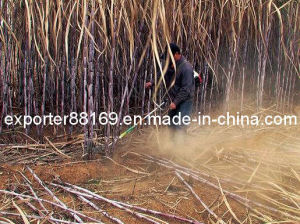 Multifunctional Sugarcane Harvester pictures & photos