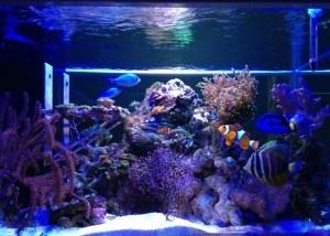 LED Aquarium Light (JJ-WP-GLN9W-L9)