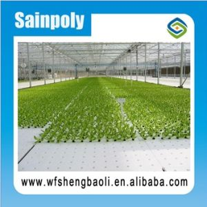 The Sainpoly Seedbed System for Greenhouse pictures & photos