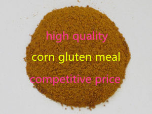 Corn Gluten Meal for Animal Feed (HOT SALE) pictures & photos