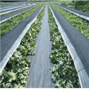 PP Woven Weed Control Fabrics pictures & photos