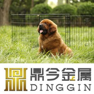 Two Doors Dog Pet Products pictures & photos