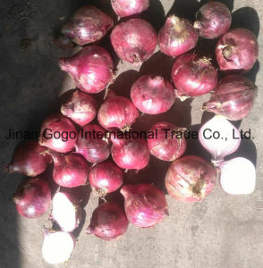 New Crop High Quality for Exporting Red Onion pictures & photos