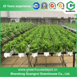 Best Price Polycarbonate (PC) Sheet Greenhouse for Sale pictures & photos