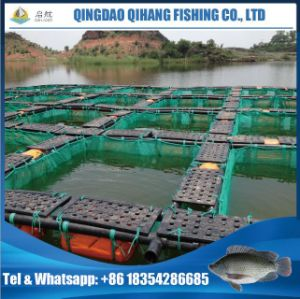 Tilapia Fingerlings Farming Cage Popuplar in The Dam pictures & photos