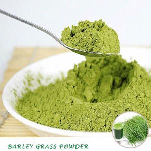 Natural Superfood Green Barley Grass Powder pictures & photos