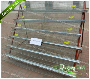 Hot Sales for Bird Cage