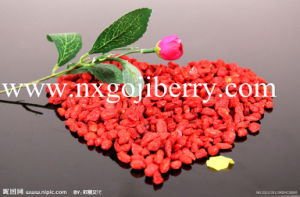 High Quality Dried Chinese Medlar Fruit pictures & photos