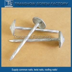 China Produce Umbrella Head Nails pictures & photos