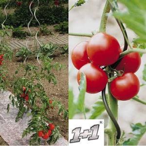 Galvanized Tomato Spirals Plant Support pictures & photos