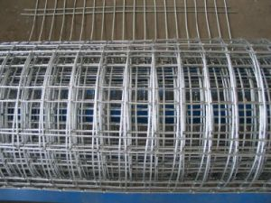 High Zinc Coated Welde Wire Mesh for Protecting pictures & photos