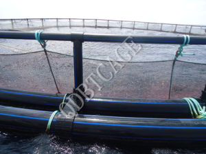 Aquaculture Circular Farming Rainbow Trout Cages pictures & photos