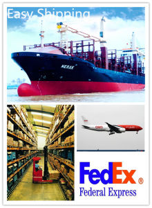 Consolidate Trust Worthy Logistics Freight Service From China to USA pictures & photos