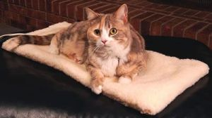 Hot Selling Flexible Heated Pet Bed pictures & photos