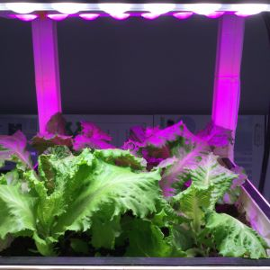 Patented LED Grow Light with Reflector Cup and Lens pictures & photos