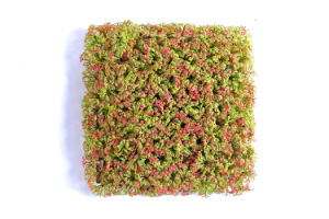 Various of Artificial Grass SOD for Decoration