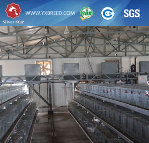 Battery Cage for Egg Chicken pictures & photos