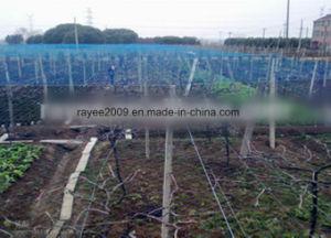 EU USA Markets Virgin Agricultural Anti Bird Net Balcony Net pictures & photos