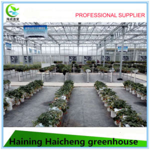 Multi Span Commercial Glass Greenhouse for Flower pictures & photos