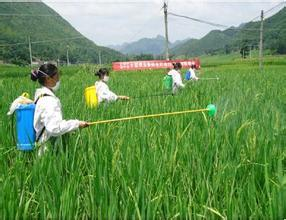 Agrocutural Chemical Pymetrozine-Nitenpyram Plant Crop Protection Pesticide Teflubenzuron pictures & photos