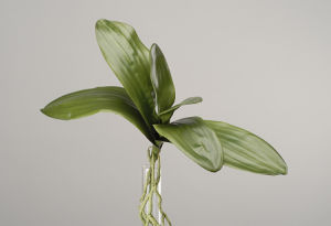 Best Selling Artificial Flowers of Natural Touch Orchid Leaves Gu-Jy902123107 pictures & photos