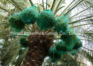 Hot Sale in Mideast! ! 80X100cm, 70X90cm Green Mono Filament HDPE Date Tree Date Palm Bag pictures & photos