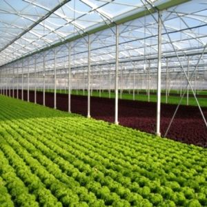Polytunnel Greenhouse Vegetable Soil with Metal Structures pictures & photos
