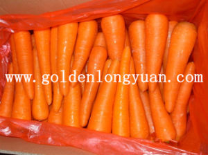 2016 New Crop Carrot From Shandong pictures & photos