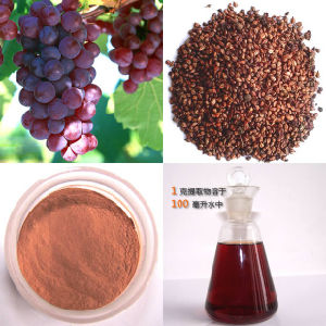 Grape Seed Extract Proanthocyanidins 95%