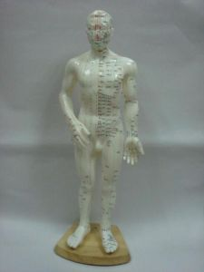 Acupuncture Model - Whole Body Model 68cm pictures & photos