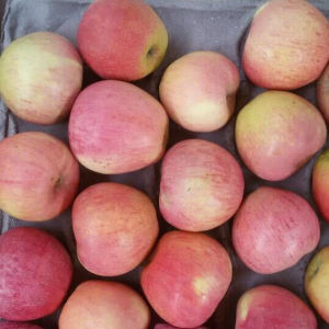 Supplying From Orchard Fresh Red Qinguan Apple pictures & photos