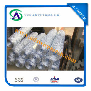 Electro Galvanized Steel Hexagonal Wire Mesh and Hot Dipped Galvanized Steel Hexagoanl Wire Mesh (direct supplier) pictures & photos