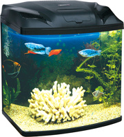 Attractive Glass Mini Aquarium (MN280)