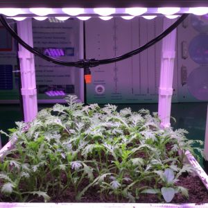 Fruit Cultivation LED Grow Light Bar with Lens pictures & photos