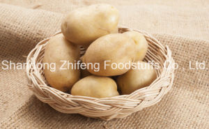 Chinese Wholesale Yellow Potato pictures & photos