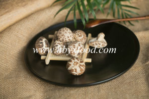 Tasty Vegetable Dried Tea Flower Mushroom pictures & photos